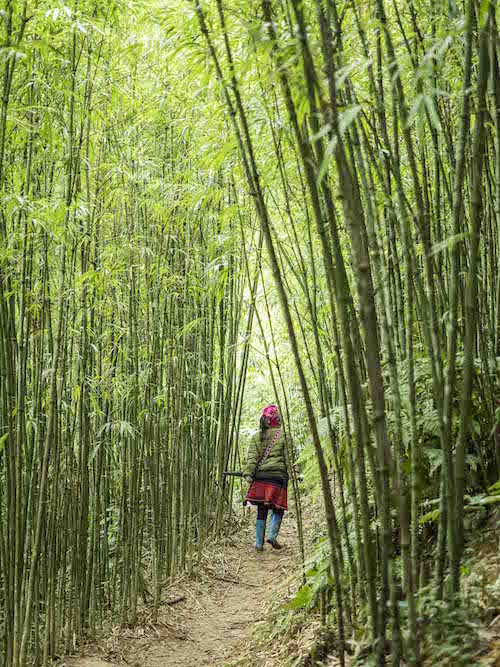 Mujer en bosque de bambú