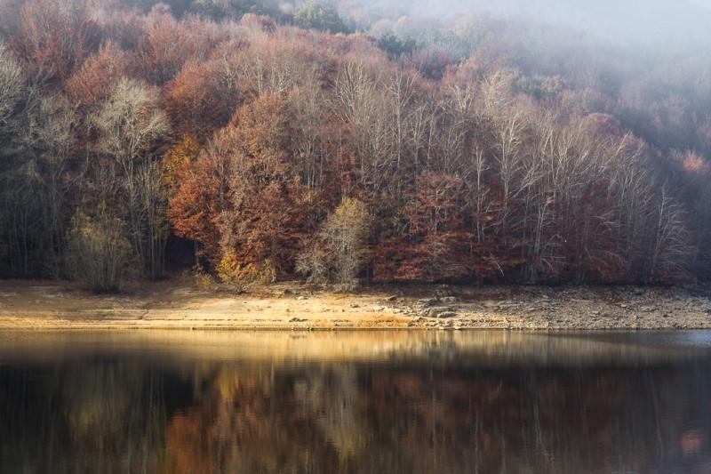 Bosque en otoño con reflejos al agua del estanque