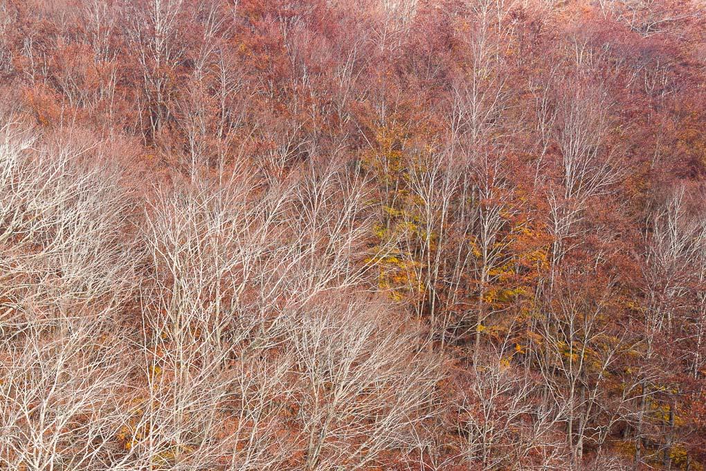 Bosque rojo otoño