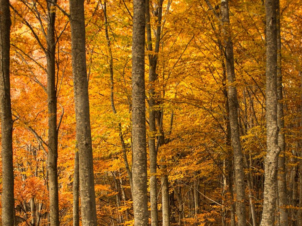 Paisaje de otoño con tonos cálidos