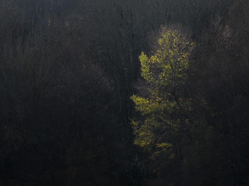 Árbol iluminado que sale de la oscuridad