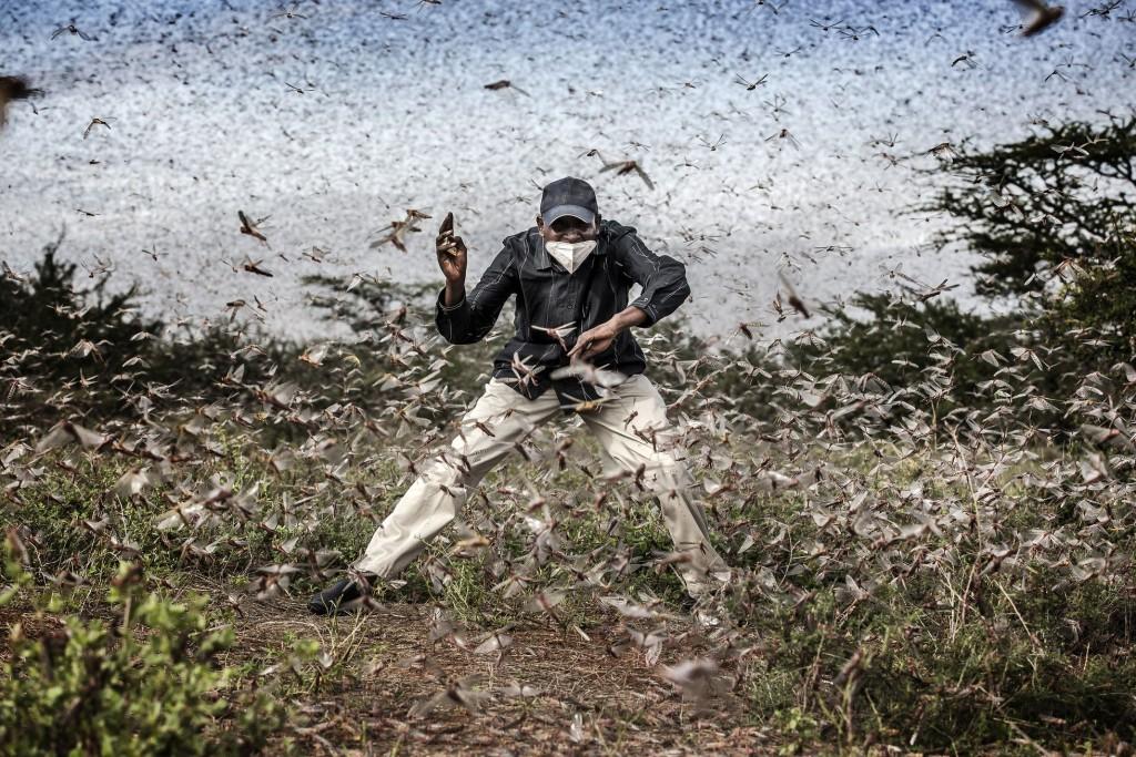 """Tercer premio de historias de la naturaleza, la imagen """"Lucha contra la invasión de la langosta en el África oriental"""", de Luis Tato."""